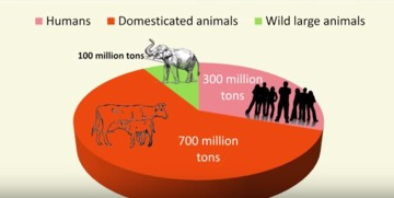 Comparing weights of humans, domesticated animals and wild animals